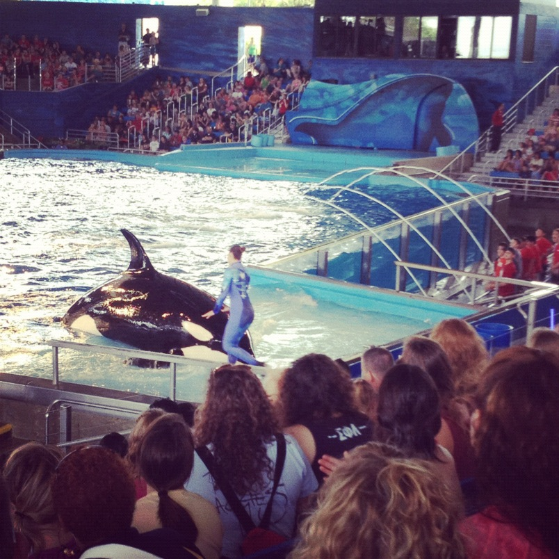 Tips For Sea World San Antonio Clumsy Crafter