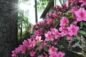 Azaleas and America Flag via ClumsyCrafter