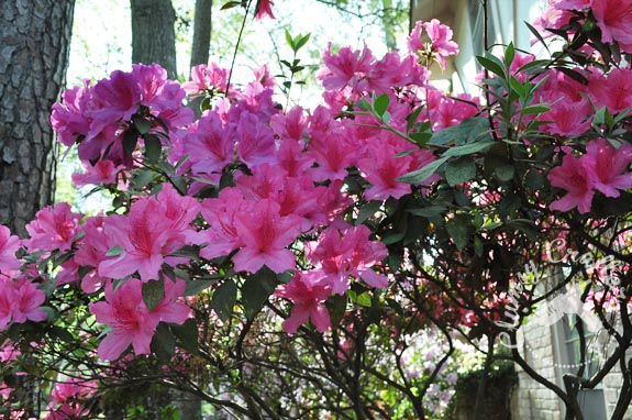 The Azaleas Clumsy Crafter