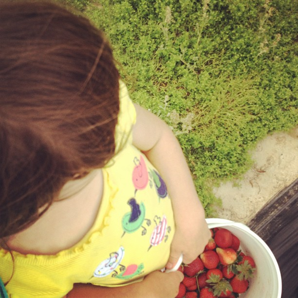 Strawberry picking in Houston