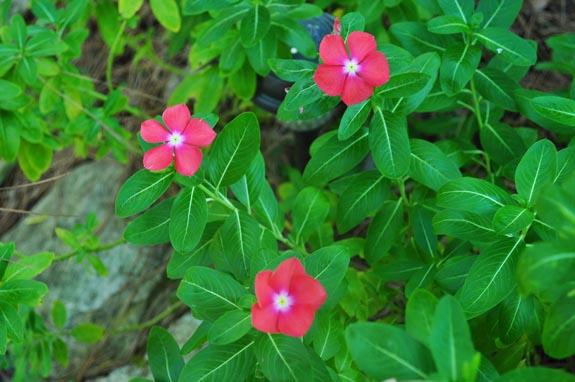 flowers in fall 2