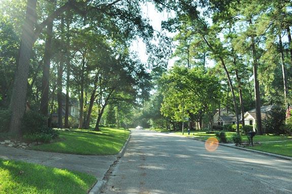 green trees on the street in september in Houston