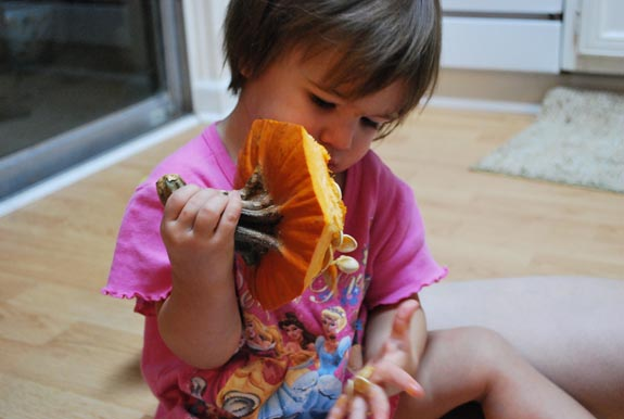 ellie pumpkin blog