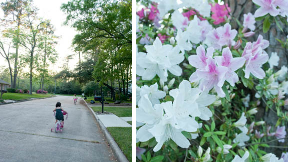 bike riding and azaleas