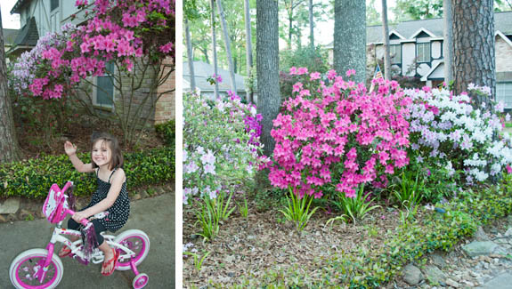 ellie and azaleas blog