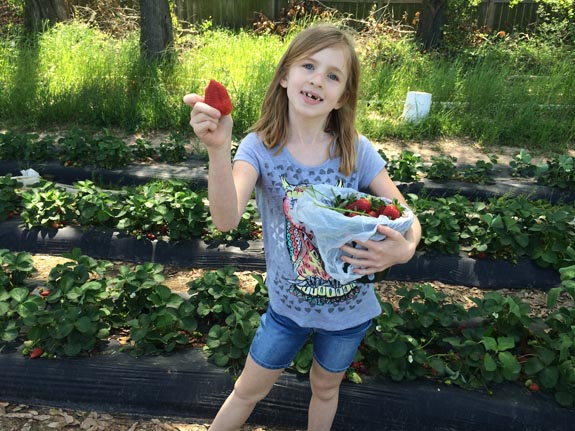 Strawberry Picking 2014