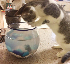 cat catching fish copy
