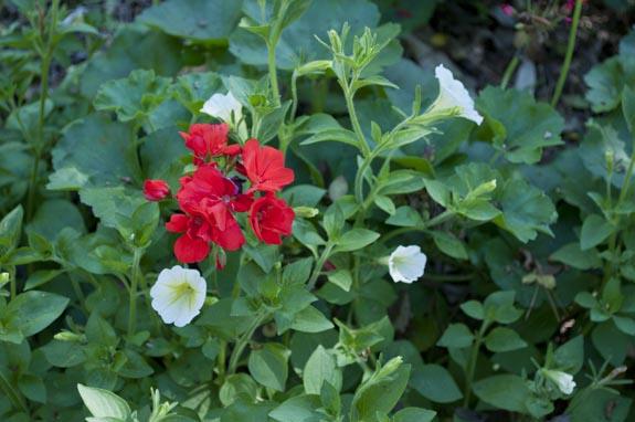 houston botanical gardens - mercer arboretum - Clumsy Crafter