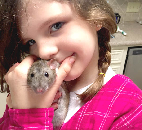 are rats a good pet for kids