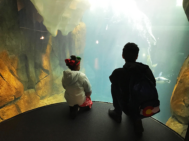 Moody Gardens Aquarium - Things to do in Gavleston TX