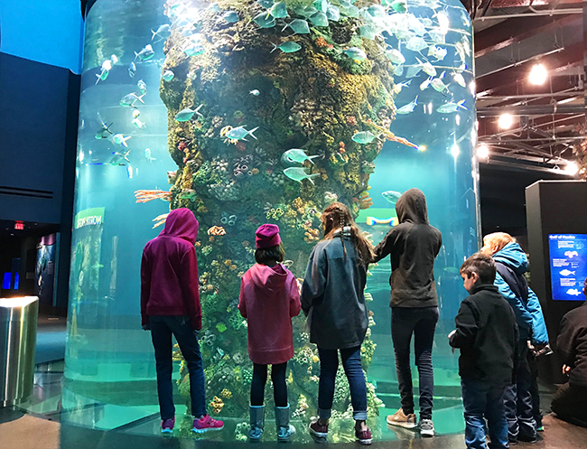 Moody Gardens Aquarium - things to do in galveston