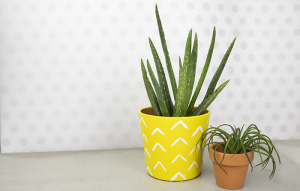 DIY Pineapple Painted Aloe Plant Pot