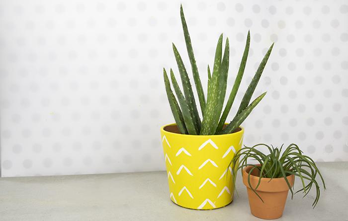 summer craft idea - aloe pineapple pot